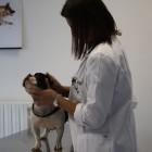 Veterinari-Mirano (3)