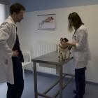 Veterinari-Mirano (4)