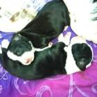 Cuccioli di Rosy e Poldo